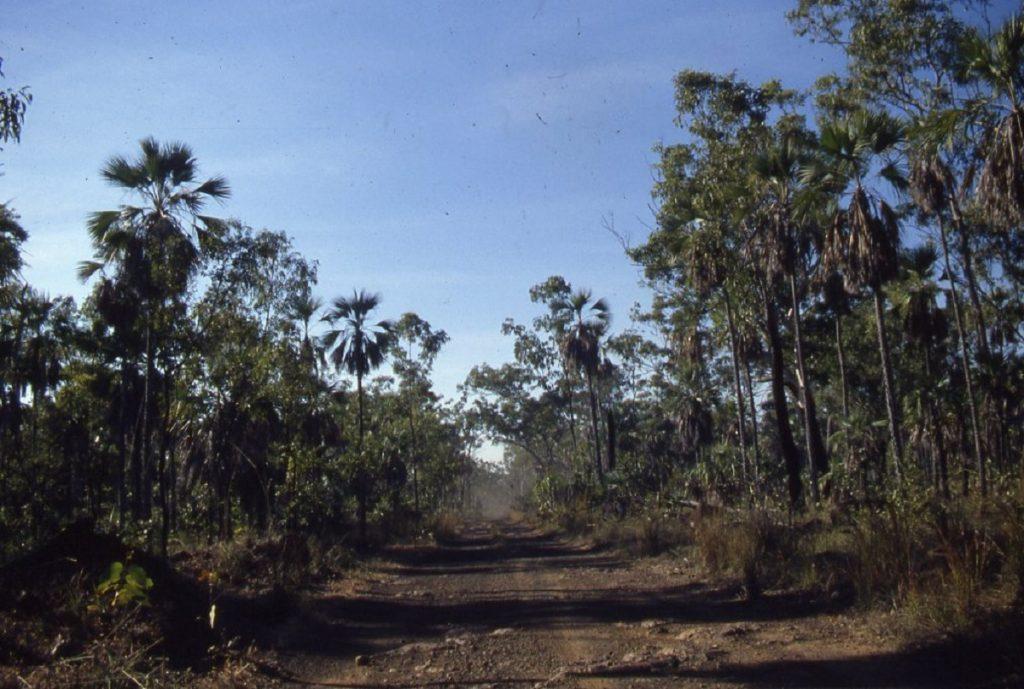Mitchell Plateau track