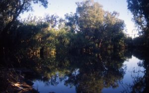 Wickham River