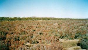Samphire plain