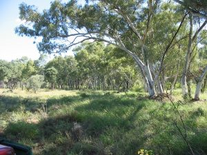 Gill Creek Gums