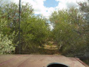 Overgrown Kidson Track