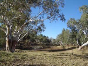 Sturt Creek billabong
