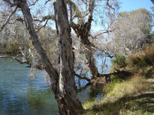 Einasleigh River