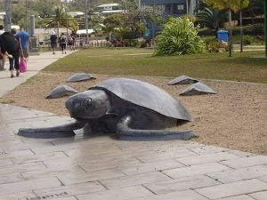 Turtle Sculptures