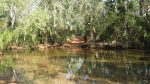 Goyder River
