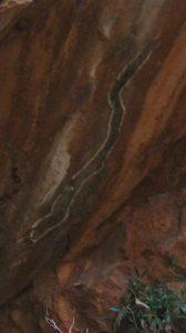 Watersnake art