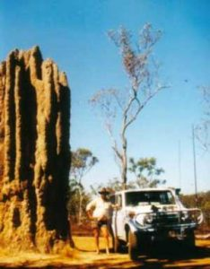 Giant Cathedral Anthill