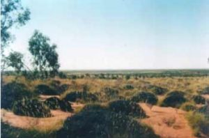 The Great Sandy Desert