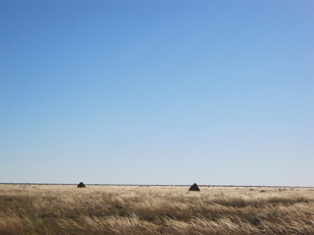Tanami Plains