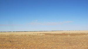 Mitchell Grass plains of Western Queensland