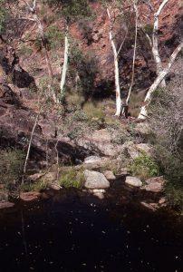 Fern Falls Pool