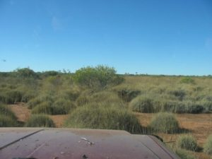 Endless Spinifex