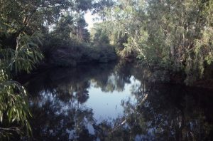 Palm Creek Billabong