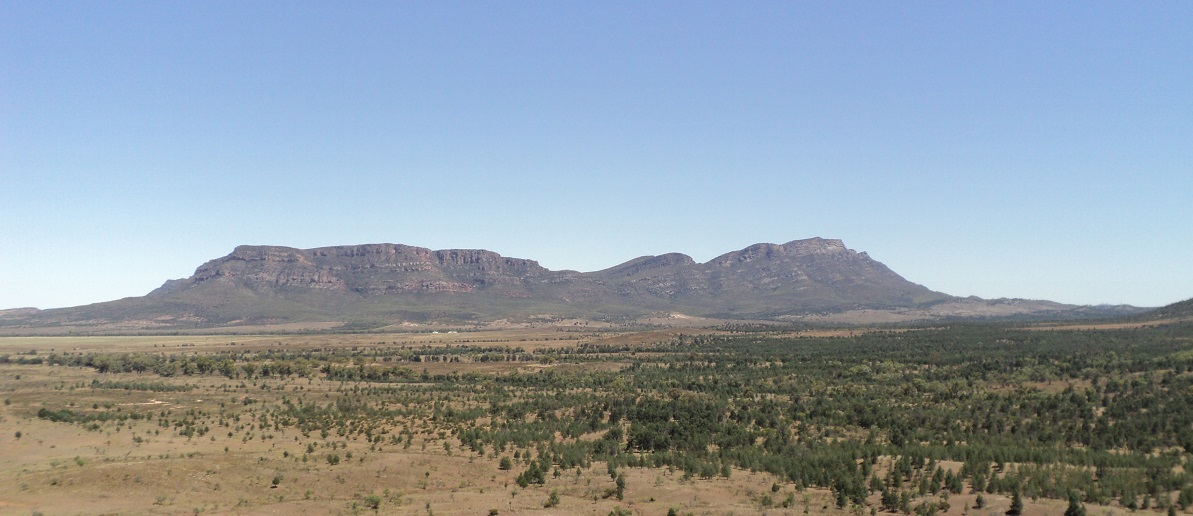 Wilpena Pound in the distance