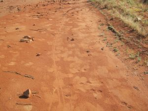 Bicycle and Camel tracks