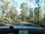 Uphill forest drive