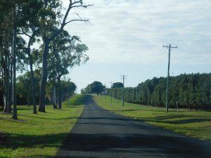 Macadamia plantations